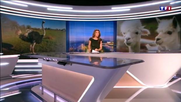 On parle de nous sur TF1 !